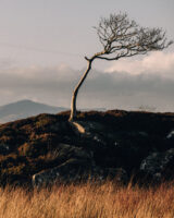 the_road_to_Tyninghame__51A0919