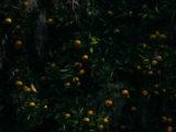 pleasure_garden__51A3576