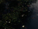 Linn_gardens_51A4406 copy